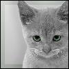 Аватар для Mikser